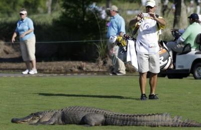 Australia, azzannato da un coccodrillo mentre gioca a golf