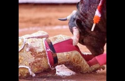 Il torero messicano Antonio Romero incornato nell'ano. � gravissimo