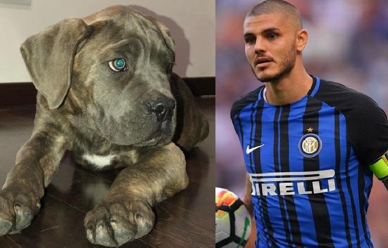 """Mauro Icardi indice un concorso: """"Aiutami a trovare il nome per il cucciolo"""""""