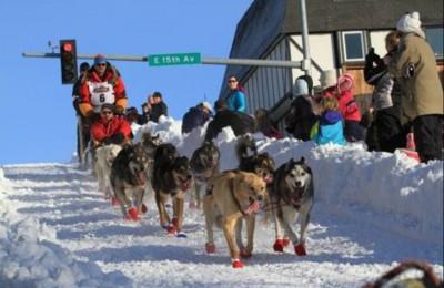 Anche i cani sono dopati: muta trovata positiva ad oppiaceo in una corsa su slitta