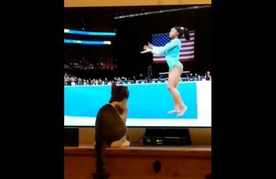 La ginnasta si esibisce e il gatto copia le sue movenze davanti al tv